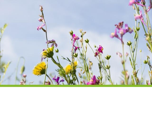 fleurs bio