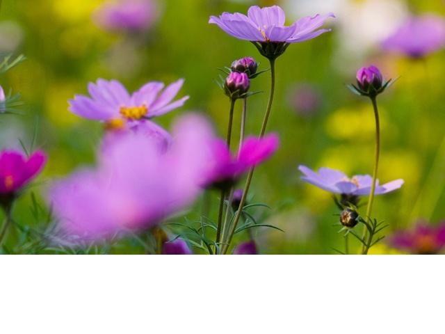 fleurs miel onctueux